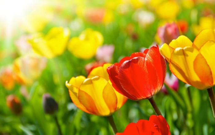 color_flower